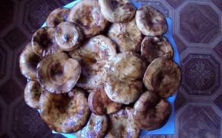 Как правильно готовить грибы свинушки