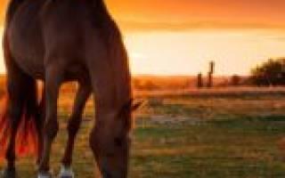 Беременный лошадь как называется правильно