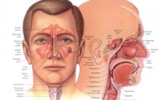 Как правильно называется врач ухо горло нос